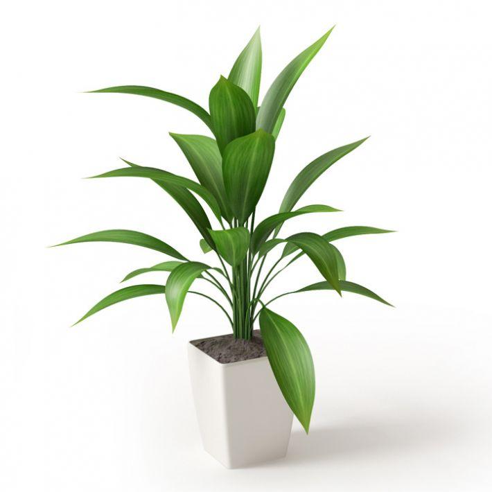 Plant 07 Archmodels vol  66