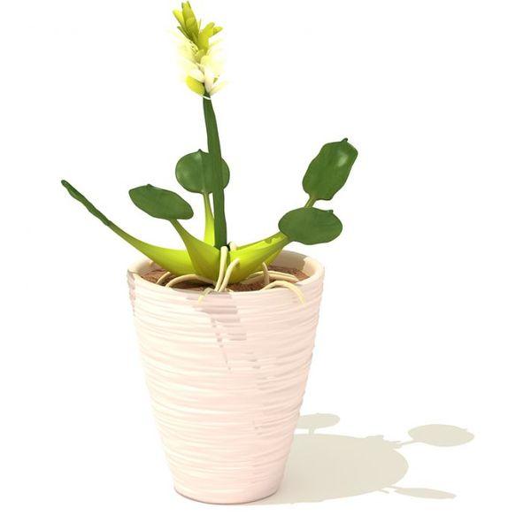 plant 47 AM41 image 0