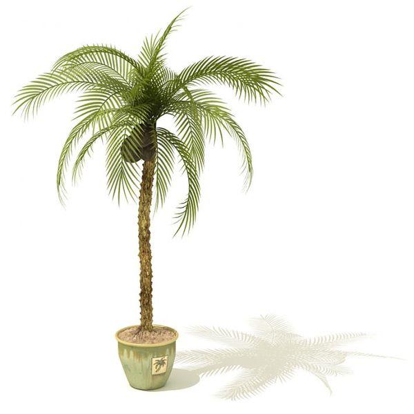 plant 15 AM41 image 0