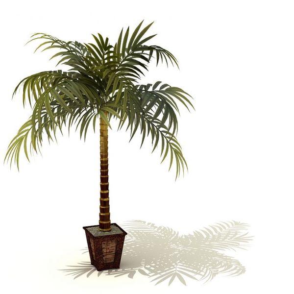 plant 09 AM41 image 0