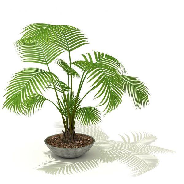 plant 05 AM41 image 0