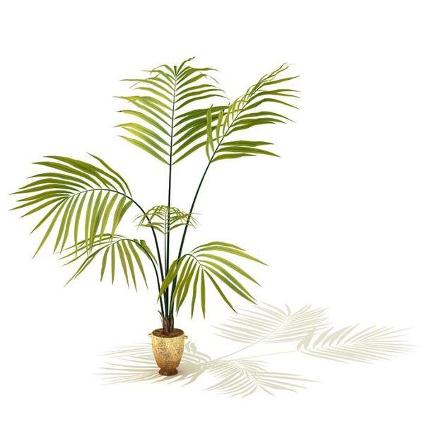 plant 02 AM41 image 0