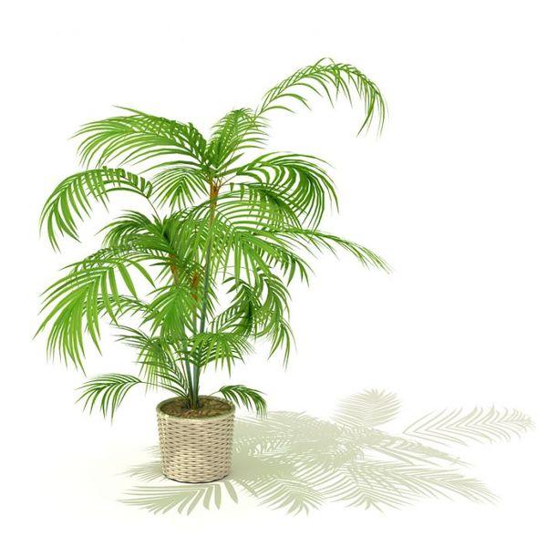 plant 01 AM41 image 0