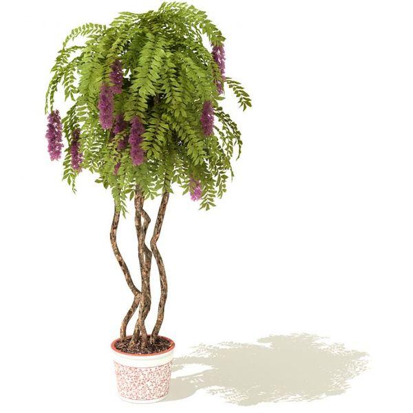 plant 27 AM41 image 0