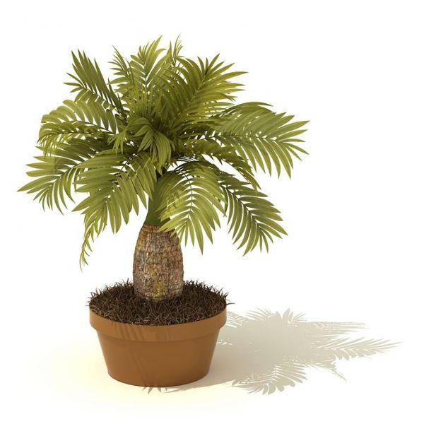 plant 04 AM41 image 0