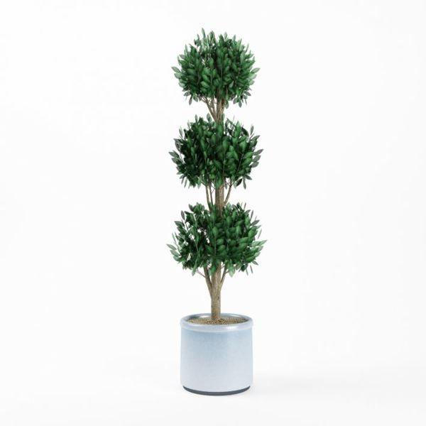 Plant 07 AM75 image 0