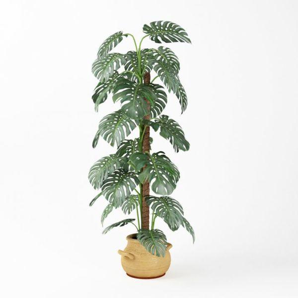 Plant 06 AM75 image 0