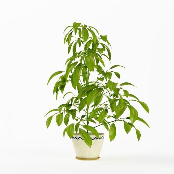 Plant 10 AM75 image 0