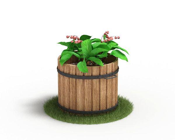 Plant 59 AM04 C4D image 0