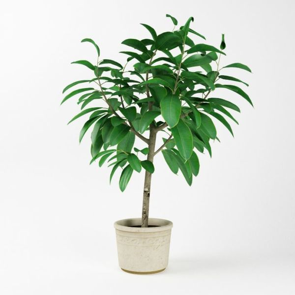 Plant 03 AM75