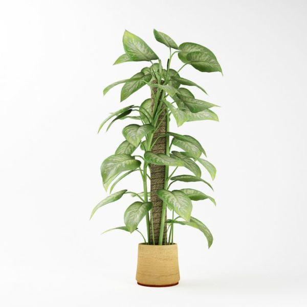 Plant 02 AM75 image 0
