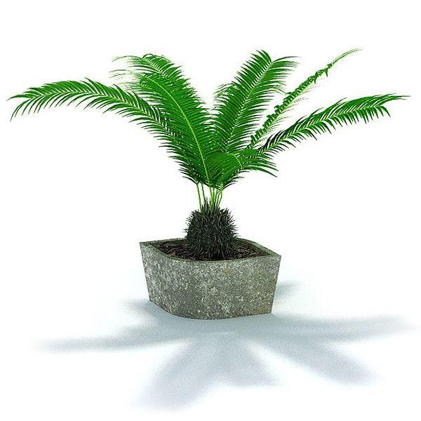 Plant 54 AM31 image 0