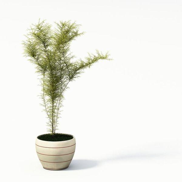 Plant 28 AM24 image 0