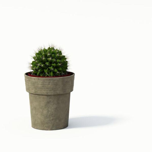 Plant 02 AM24 image 0