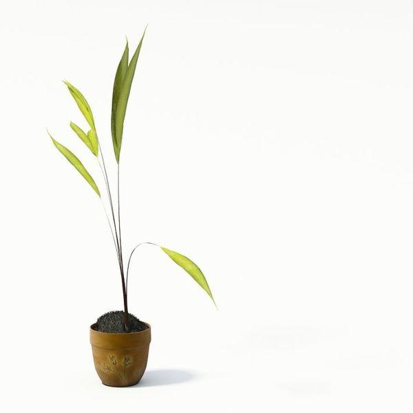 Plant 08 AM24 image 0