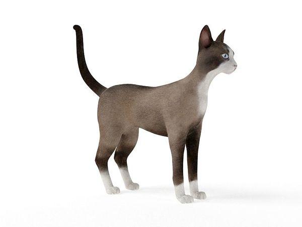 cat 66 am83 image 0