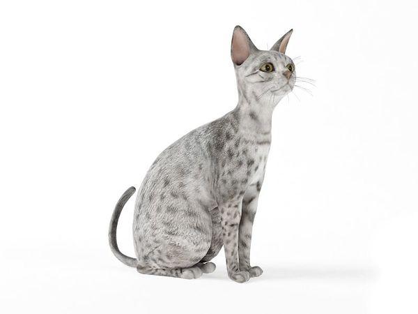 cat 59 am83 image 0