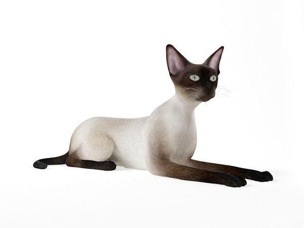 cat 55 am83 image 0
