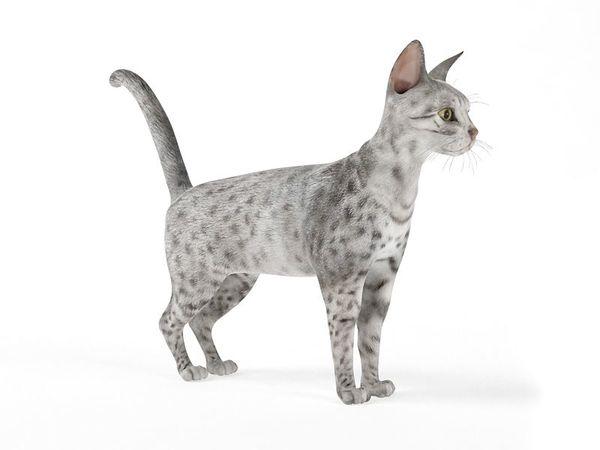 cat 57 am83 image 0