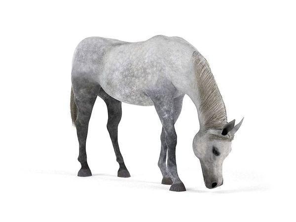 horse 45 am83 image 0