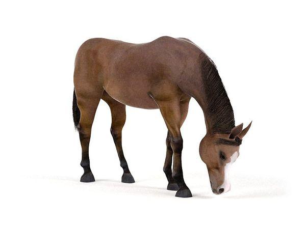 horse 42 am83 image 0