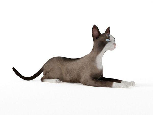 cat 68 am83 image 0