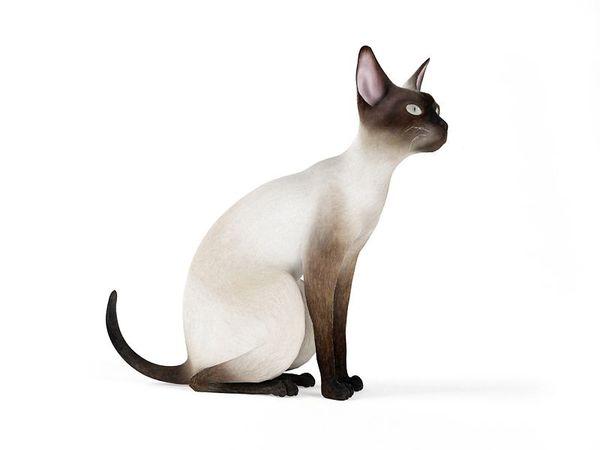 cat 56 am83 image 0