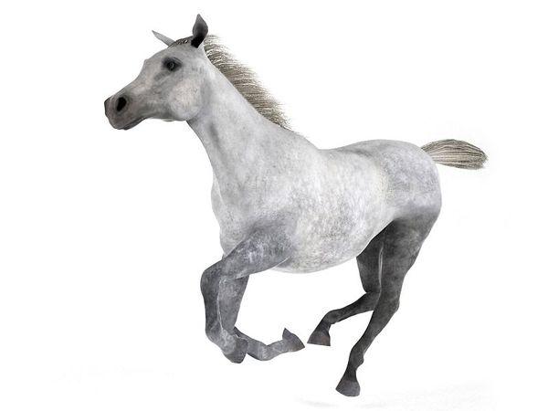 horse 44 am83 image 0
