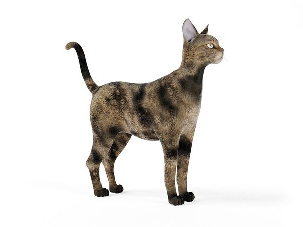 cat 46 am83 image 0
