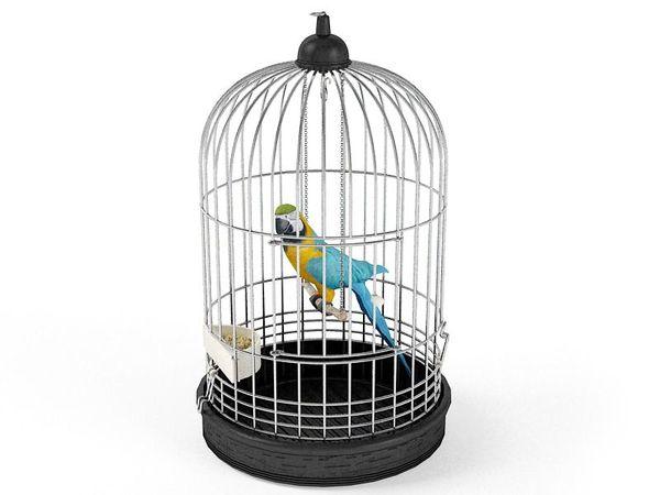 parrot 06 am83 image 0