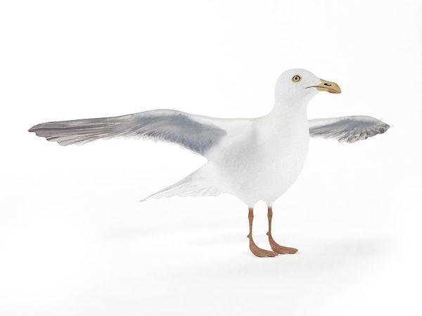 seagull 15 am83 image 0