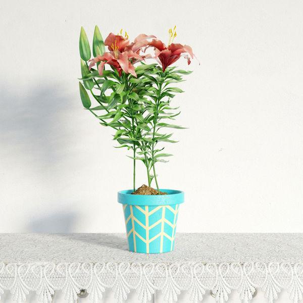plant 01 am141 Image 1
