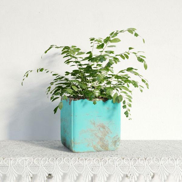 plant 03 am141 Image 1
