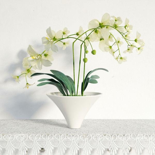 plant 05 am141 Image 1