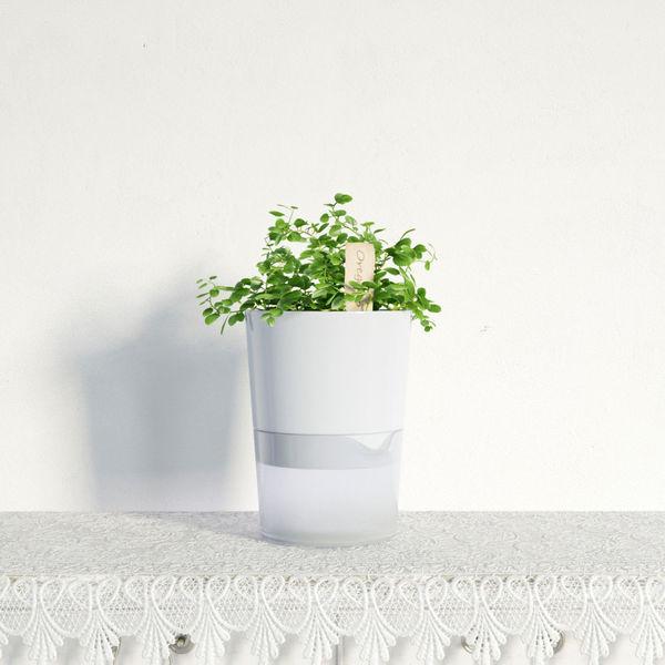 plant 27 am141 Image 1