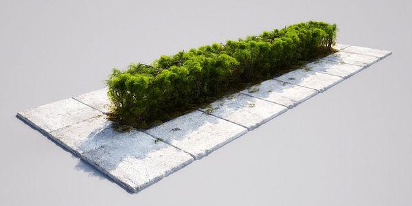 hedge 16_06 AM148 Image 1