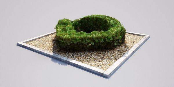 hedge 17_03 AM148 Image 1