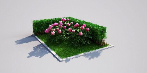 hedge 18_03 AM148 Image 1