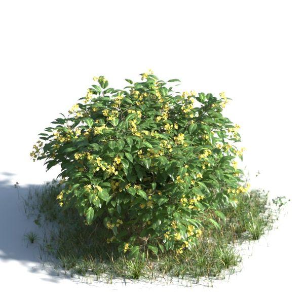 plant 10 AMC01 Image 1