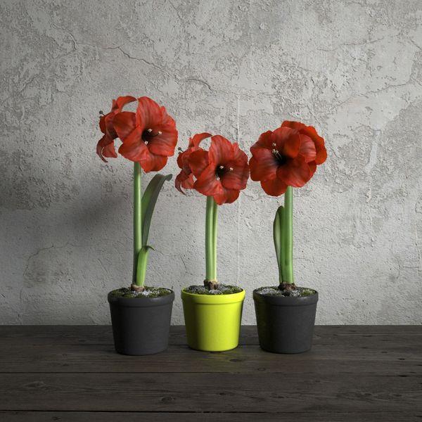 plant 07 am173 Image 1