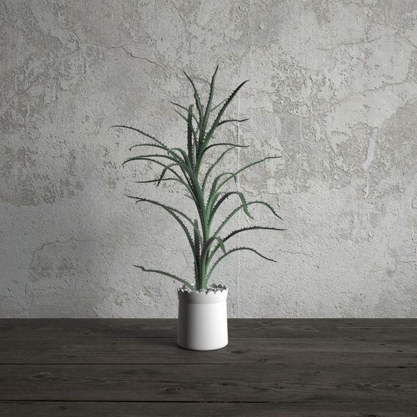 plant 13 am173 Image 1