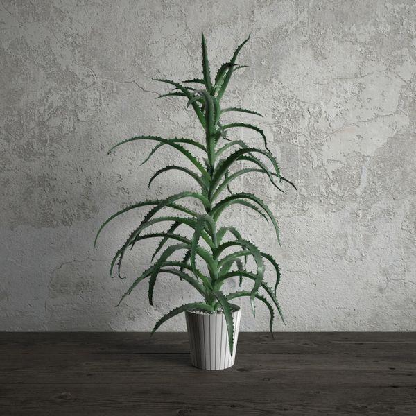 plant 14 am173 Image 1
