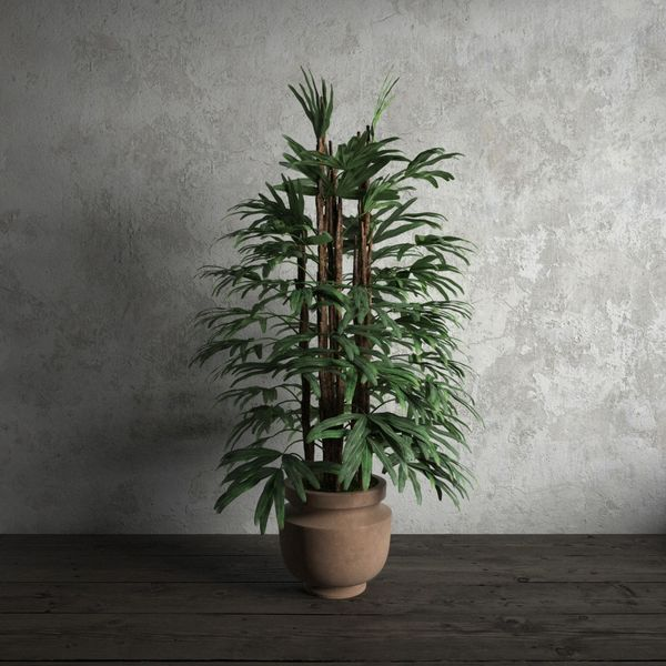 plant 17 am173 Image 1