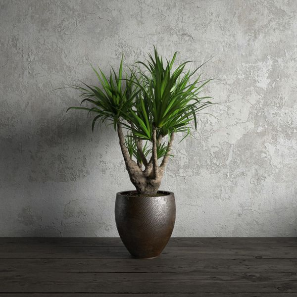 plant 18 am173 Image 1