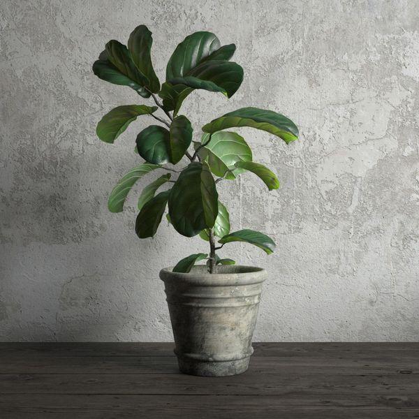 plant 20 am173 Image 1