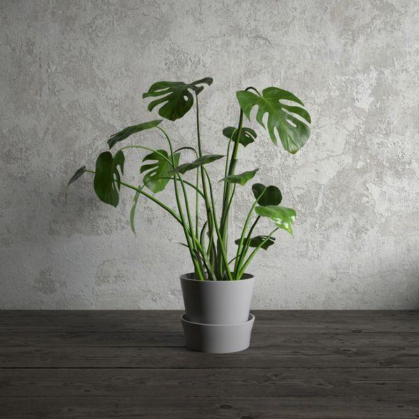 plant 23 am173 Image 1
