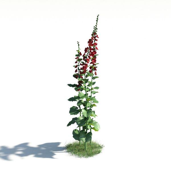 plant 02 AM183 Image 1