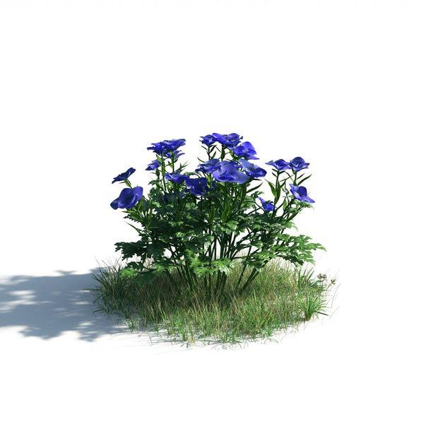 plant 05 AM183 Image 1