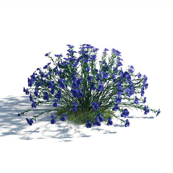 plant 07 AM183 Image 1