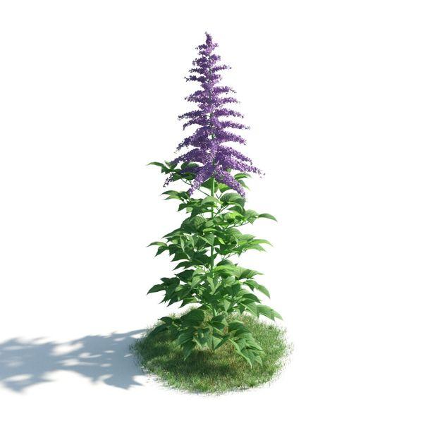 plant 08 AM183 Image 1